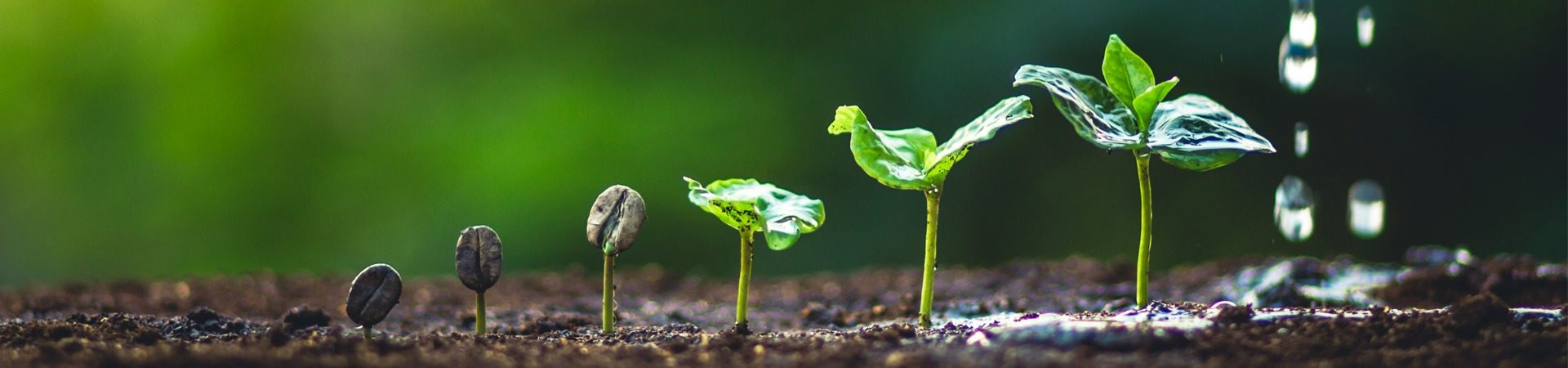 16July-2019-A-Seed-Is-Born